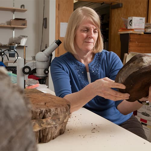Carol Griggs (Senior Lecturer and Research Associate) inspecting a cross-section of a tree in the dendrochronology lab.